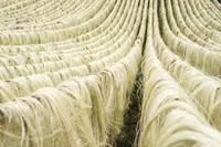 more images of SISAL FIBER