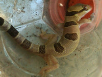 SNAKE VENOM, live and death BEETLES, AMPHIBIANS, REPTILES, PYTHONS, VI,