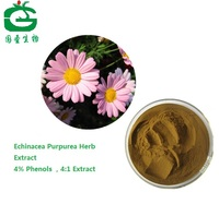 Natural Cichoric acid/Echinacea Purpurea extract/ Echinacea extract powder4%Polyphenol