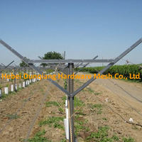 Hot Dipped Galvanized Y Type Vineyard Grape Post Trellis Column