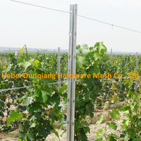 275g/M2 Zinc Coating Galvanized Metal Vineyard Grape Trellis Post