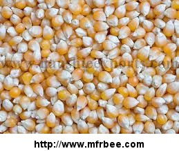 Offer To Sell Yellow Corn (Maize)