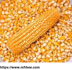 local_whole_corn